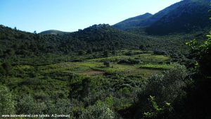 Views over Vineyards on Lastovo